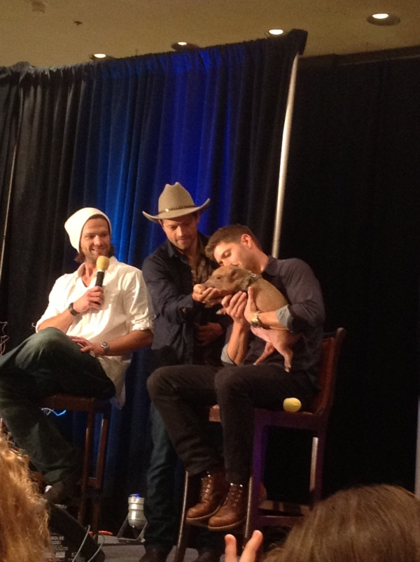 The pig is all Misha's doing. Naturally.