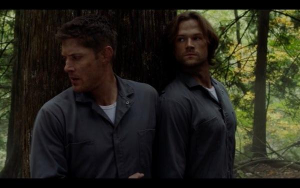 12-09-boys-woods-shoulder-to-shoulder